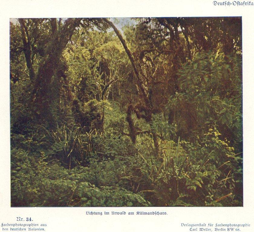 Nr. 34 Deutsch-Ostafrika, Lichtung im Urwald am Kilimandscharo